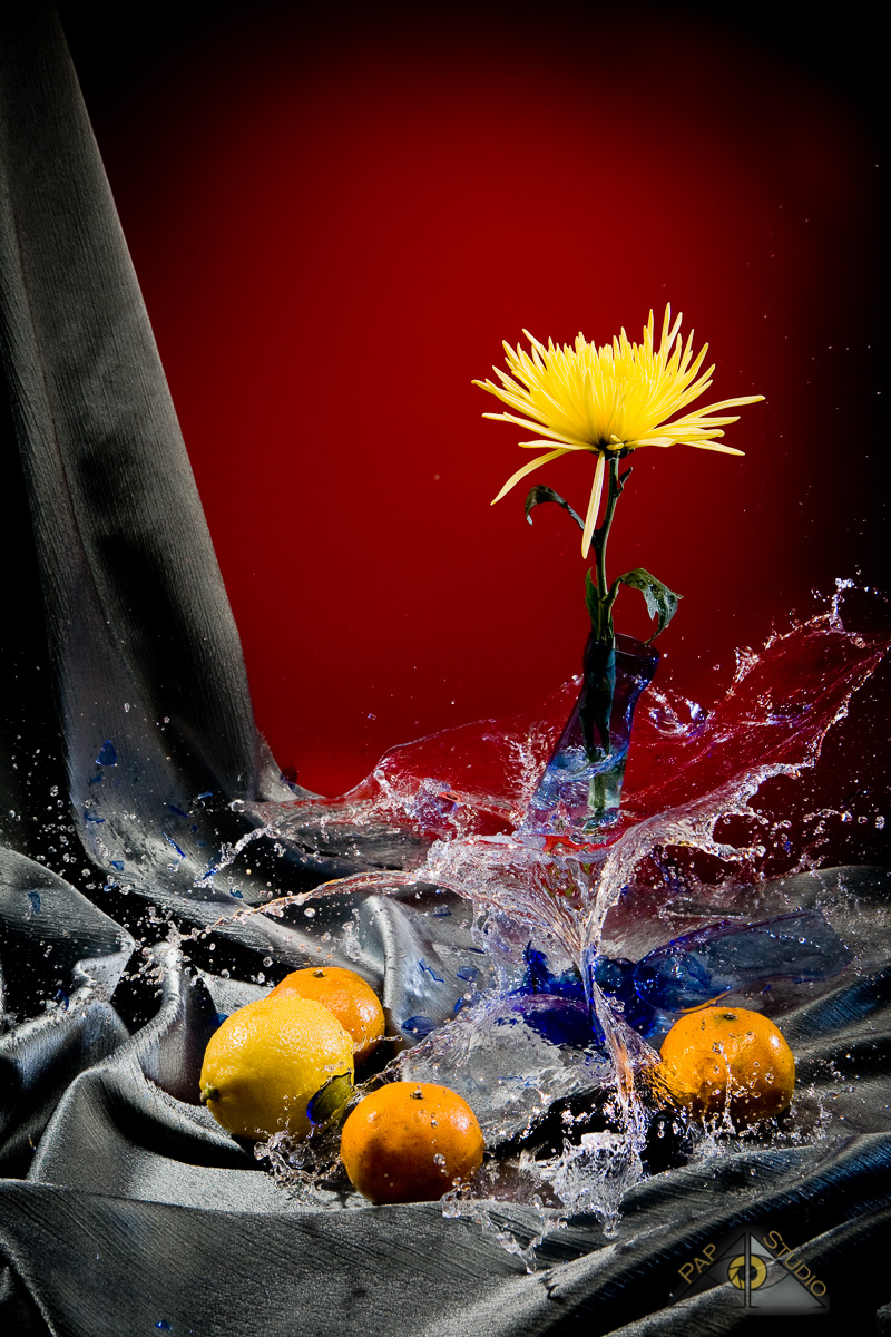 Creative Photography_Broken Glass Flower_Arpi Pap