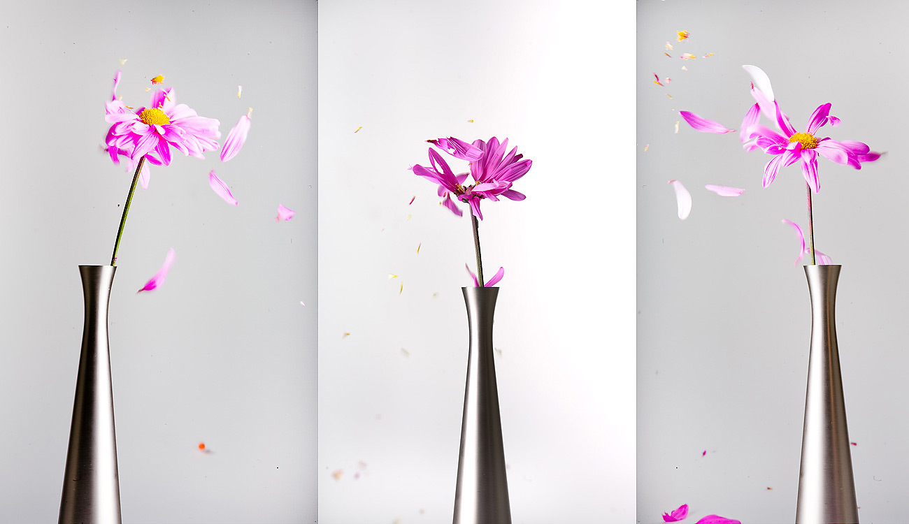 Creative Photography_Flower Petals_Arpi Pap