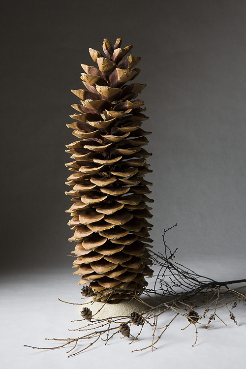 Creative Photography_Still life Pinecone_Arpi Pap