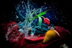 Creative Photography_Broken Glass Tulip_Arpi Pap