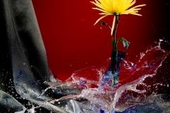 Creative Photography_Broken Glass Flower_Arpi Pap