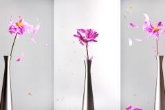 Creative Photography_Flower Petals_Arpi Pap