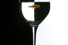 Creative Photography_Fish in Wine Glass_Arpi Pap