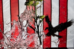 Creative Photography_Broken Glass with Eagle_Arpi Pap